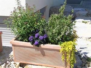 Pflanzen Kübel : kisten k bel pflanzen ~ Pilothousefishingboats.com Haus und Dekorationen