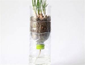 Pflanzen Bewässern Mit Plastikflasche : bew sserung mit pet flaschen so bekommen die pflanzen wasser ~ Frokenaadalensverden.com Haus und Dekorationen