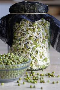 How To Sprout Mung Beans