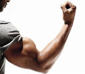 Build More Muscle  Add Inches To Your Arms