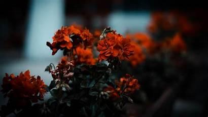 Bush Flowers Blur Background Bloom Leaves 1080p