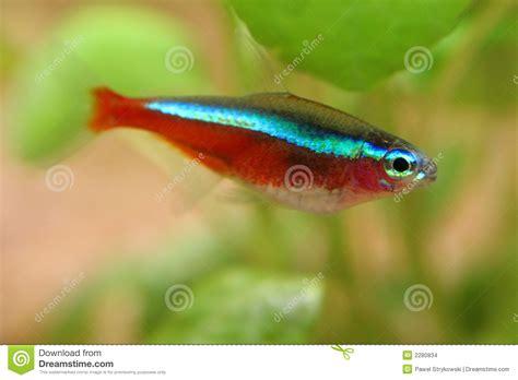 fische kleines aquarium welcher fisch l 228 sst sich leicht z 252 chten fische aquarium aquaristik