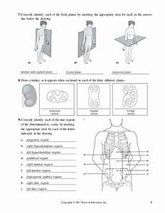 The Language Of Anatomy Review Sheet Exercise 1 Answer Key