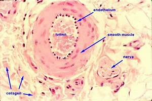 Pathology Outlines