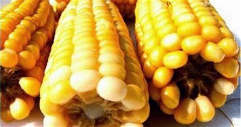 pannocchie come si cucinano come si cucinano le pannocchie spiga di mais bollite o