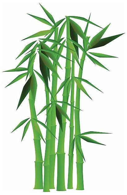 Bamboo Lucky Clip Illustrations Similar