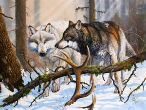 Wolves Winter Forest