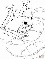 Coloring Pages Shrub Getcolorings Frog Frogs sketch template