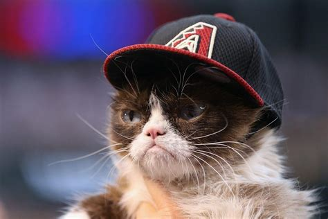 Forbes Top Influencers Grumpy Cat, The Internet's