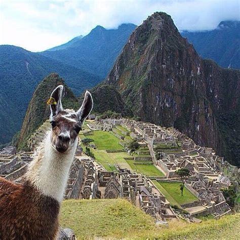 Wonderful Llama Photo by Llama Take A Selfie Location Machu Picchu Peru Photo