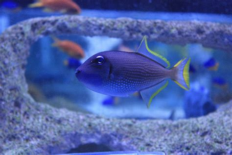 fish marine popular most bought absolutely