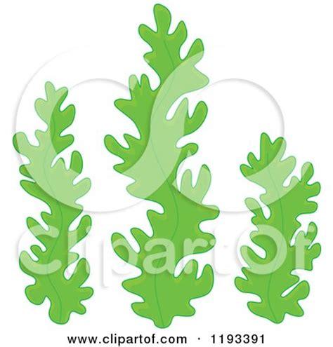 royalty  rf aquatic plant clipart illustrations