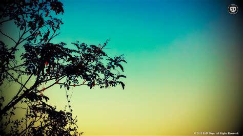 Backgrounds Hd by White Tree Silhouette Wallpaper Wallpapersafari