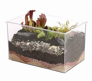 Fleischfressende Pflanze Pflege : carnivoren fleischfressende pflanzen im aquarium 25 x 17 ~ A.2002-acura-tl-radio.info Haus und Dekorationen