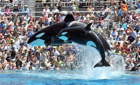 Seaworld San Diego Plans End Controversial Killer Whale