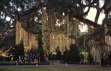 christmas light trees outdoor 2018 hanging outdoor christmas lights in trees 5576