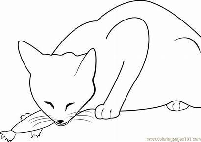 Coloring Cat Fish Pages Eats Cats Coloringpages101