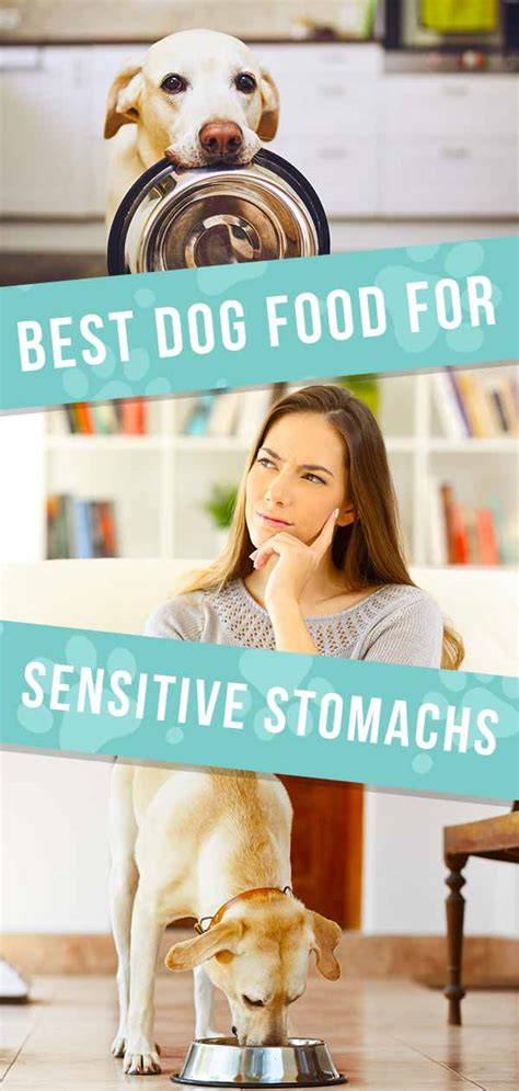 dog food  sensitive stomach issues tips  reviews