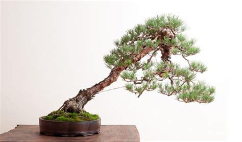 jenis tanaman hias bonsai terbaik indonesia bibit