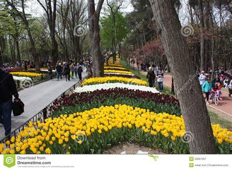 istanbul tulip festival in emirgan tulip festival emirgan park istanbul turkey editorial photography image 53097907