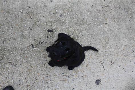 mon chien fait pipi sur les tapis 28 images uggie le chien de the artist fait le beau sur le