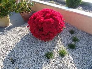 Blumen Für Schatten : pflanzen f r steingarten schatten gartens max ~ Lizthompson.info Haus und Dekorationen
