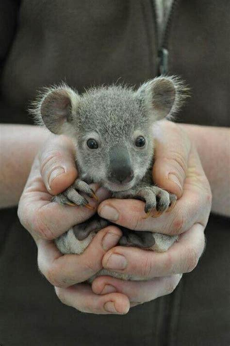 BBC One Animal Babies