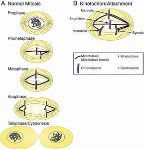 Transient Defects Of Mitotic Spindle Geometry And Chromosome Segregation Errors