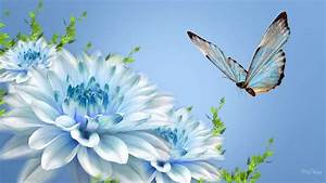 Fresh White Blue Flower Facebook Cover Photos Nature ...