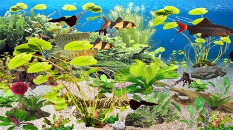 base   software clown loach aquarium