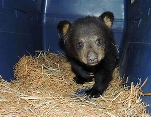 Don't Feed The Bears: City residents urged to keep their ...