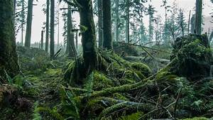 Pacific Northwest Lush Forest Floor Dolly Shot   A Camera
