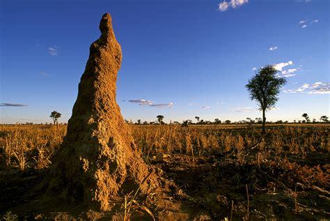 mind   mound   termites build  huge
