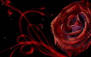 Elegant Red Roses Wallpaper HD Wallpaper