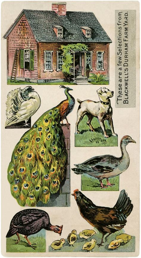 cute vintage printable farm image  graphics fairy