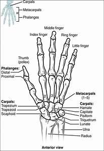 Bones  U2013 Advanced Anatomy 2nd  Ed
