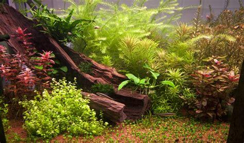 comment cr 233 er un d 233 cor d aquarium amazonien animalerie truffaut conseils d 233 corations et