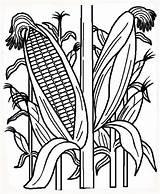 Corn Coloring Indian Stalk Template Stalks Field Fall Cornfield Printable Cornstalk Plant рисунок Vegetables Farm Sheet Planting кукуруза Fruits Vegetable sketch template