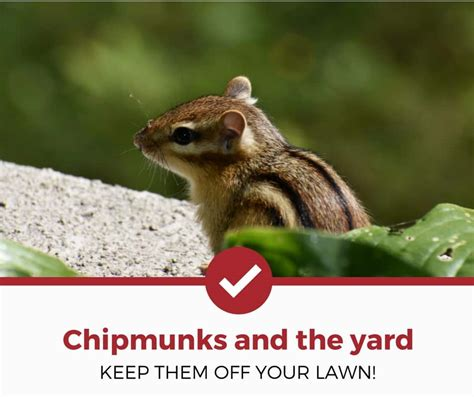 how to keep chipmunks out of your garden how to keep chipmunks out of your yard and garden pest strategies