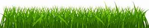 Cyprus grass clipart - Clipground