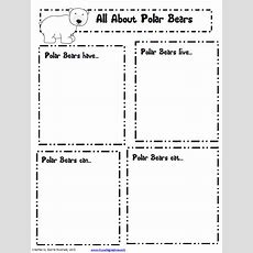 Polar Bear Fact Recording Sheetcan Turn Into S General Animal Research Recording Sheet