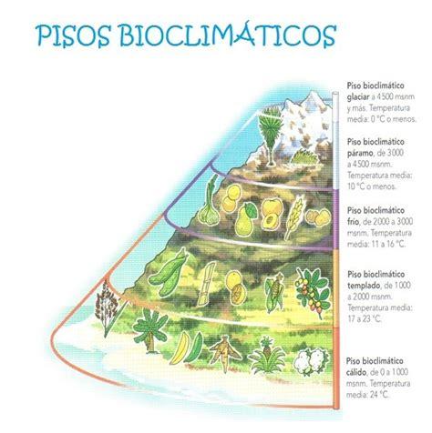 floor and decor arlington heights il pisos termicos de colombia para dibujar clei ii primera