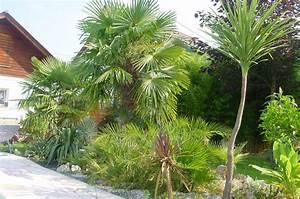 Kanarische Dattelpalme Kaufen : die richtige palme f r den garten kaufen ~ Lizthompson.info Haus und Dekorationen