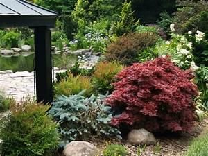 Sträucher Im Garten : japanischer ahorn im garten arten die direkte sonne vertragen ~ Watch28wear.com Haus und Dekorationen