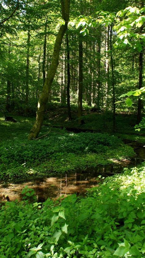 Green Forest Photo Hd by Green Forest Wallpaper 71 Images