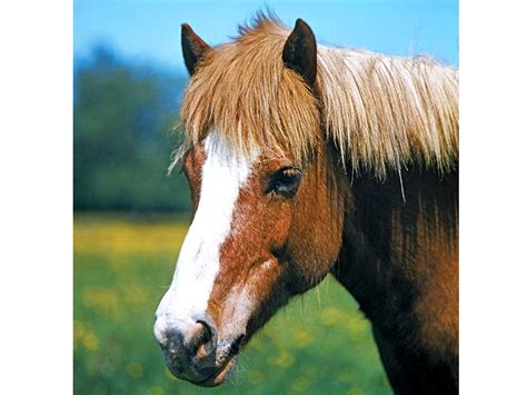 mammals mammal horse fact fiction britannica animal called quiz