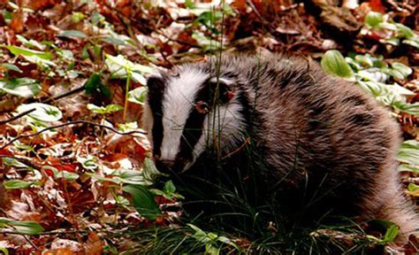 The Monmouthshire & Brecon Canal Is A Haven For Wildlife