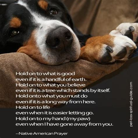 hold  pet grief losing  pet pet loss grief