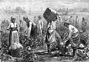 Cotton Picking | ClipArt ETC