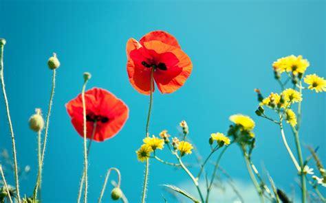 Fond D écran Fleur Les Plus Beau Fond Ecran Fleurs Fond Ecran Pc